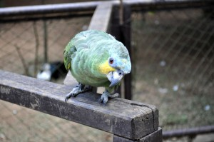 green, parrot, bird, zoo