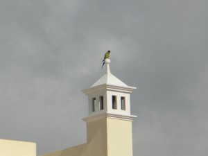 perroquet, top, bâtiment