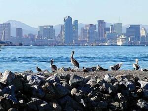 Diego, pélicans, oiseaux, ville, horizon, eau