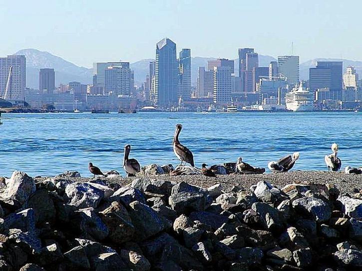 サンディエゴ、ペリカン、鳥、都市、スカイライン、水