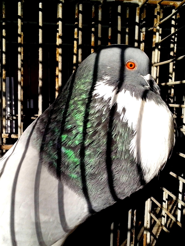 Veľký 12 palcov vtáky