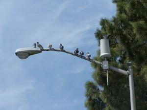 palomas, luz, polo