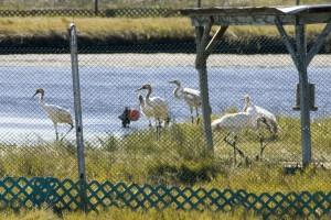 protection, en captivité, stylo, oiseaux