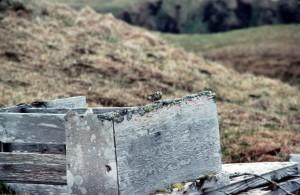 roche, bécasseau, oiseau, ruines