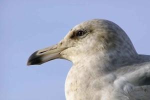bird, head, details, photo