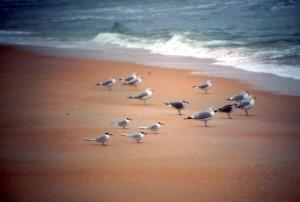 troupeau, mer, mouettes, sable