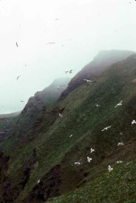gulls, Paul, island