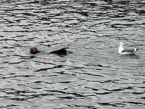 seagull, sea lion, water