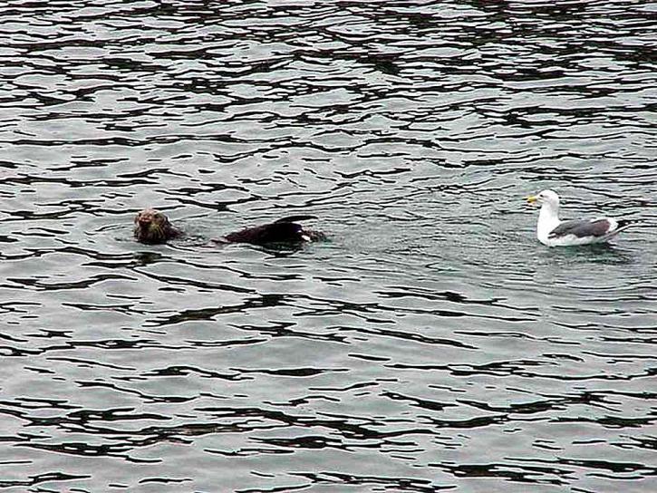 นกนางนวล สิงโตทะเล น้ำ