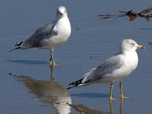 นกนางนวล มหาสมุทร ทะเล ชายหาด