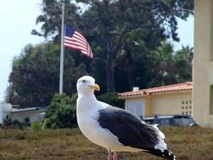 Meeuwen, vogels, vlaggen