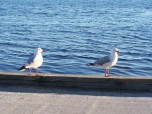 Γλάροι, λίμνη