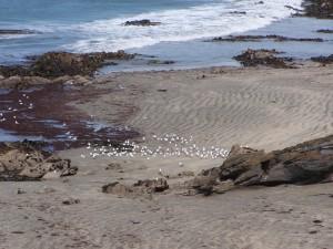 παραλία των γλάρων, σίτιση,
