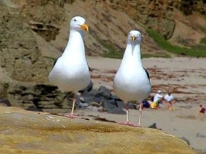 чайки, океан, пляж