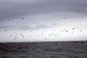 shorebirds, flying, ocean, waves