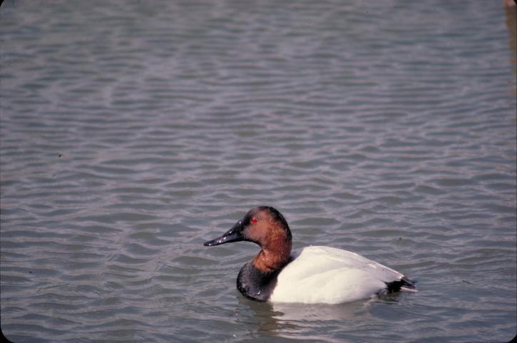 côté, oiseau, assis, de l'eau