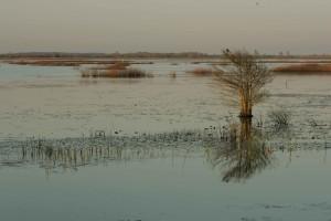 unique, oiseau, petit, chauve, cyprès, ouvert, les zones humides, les plantes aquatiques