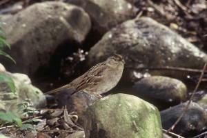 small, birds, rocks