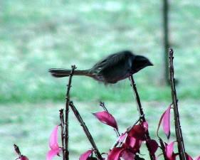 Sparrow, bay