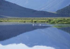 trompetista, família, Lago Cisnes,