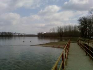twee, grote, witte vogels, zwanen, vliegen, Donau, rivier