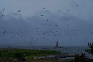 stádo, ružový hovorí:, rybár, vtákov, letových