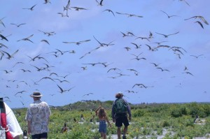 sooty, terns, fly, overhead, people