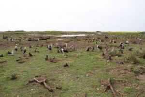 gewassen, gebied, eiland, vogels