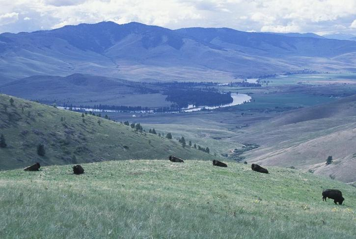bison, national, bison, range