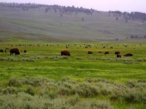 lamar, valley, buffalo