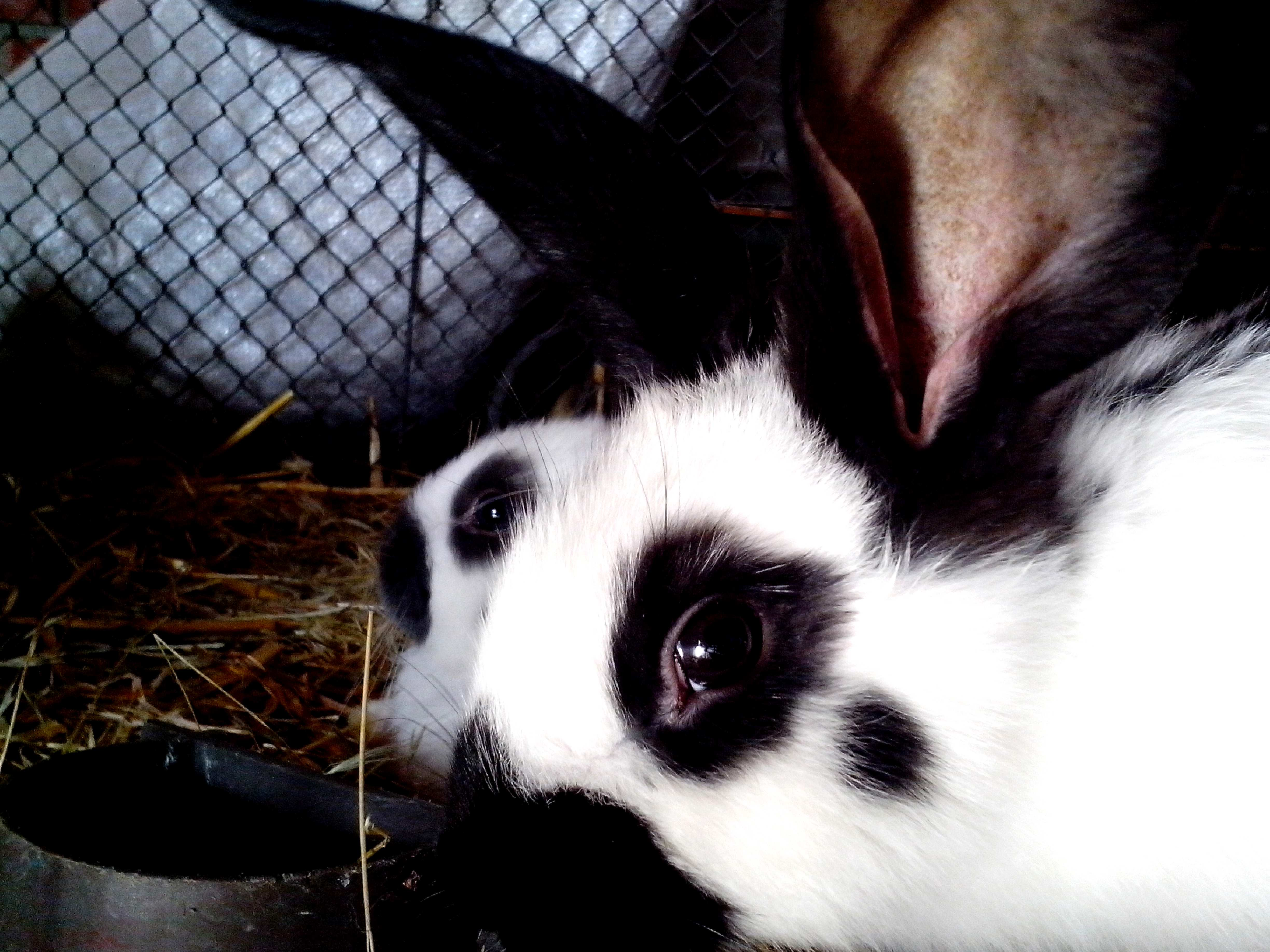 Free photograph; black, white, dotted, sweet, rabbits