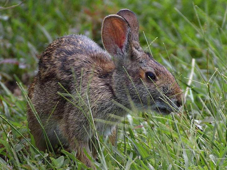 bunny, bunnies, rabbits