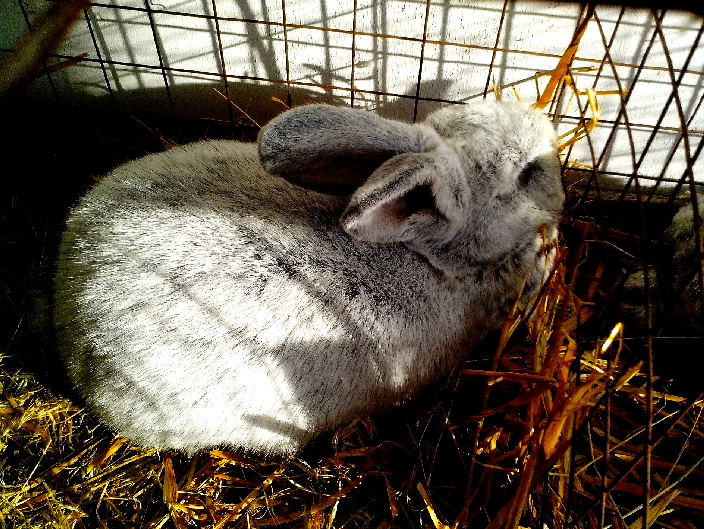 Free photograph; cute, bunny