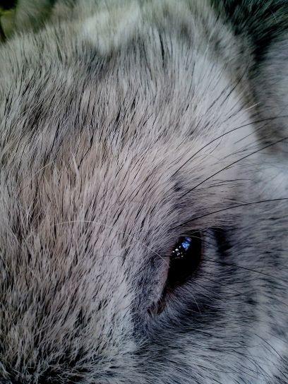 cute, rabbit, pet