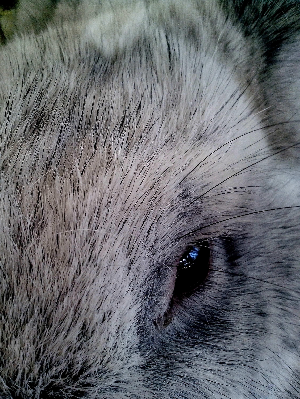 Free photograph; cute, rabbit, pet