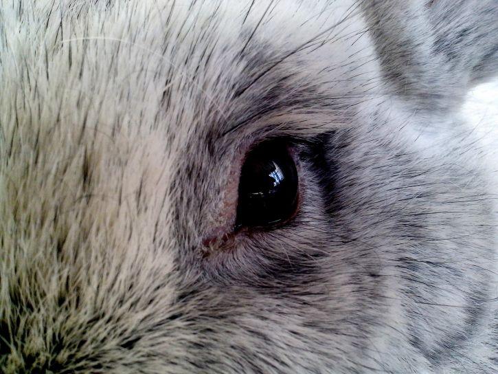 eye, close, rabbit