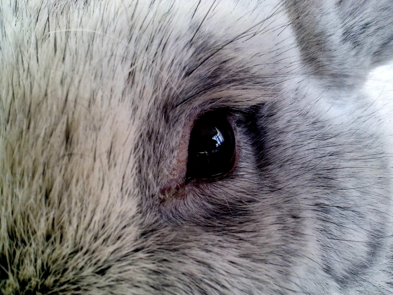 Free photograph; eye, close, rabbit