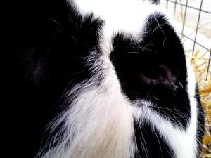 head, black and white, rabbit