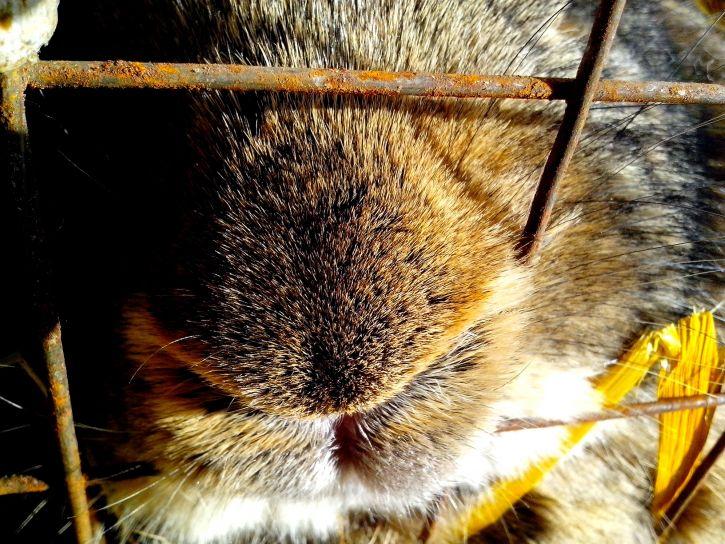 muzzle, rabbit, rodent