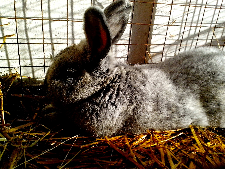 Free photograph; nice, cute, bunny, rabbit