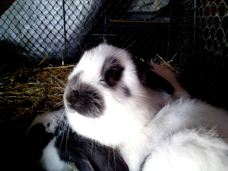 Free photograph; rabbit, head, body