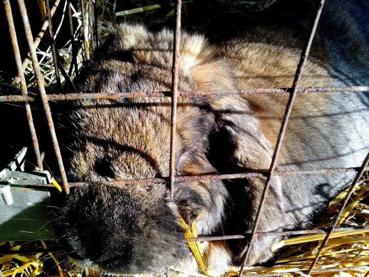 rabbit, sleeps, cage