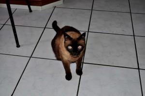 black, cat, looking