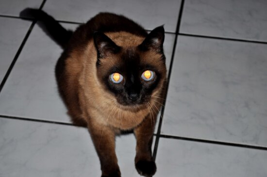 black, cat, looking, camera