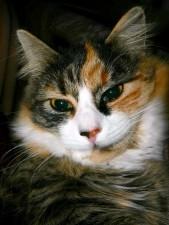 cat, close