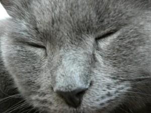 chat, visage, macro