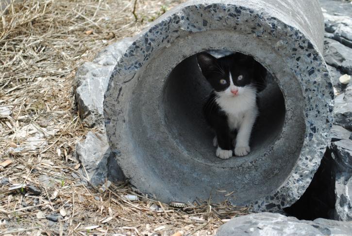 cat, tube