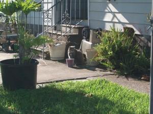 cat, backyard