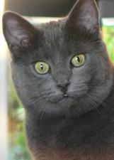 cat, staring, eyes