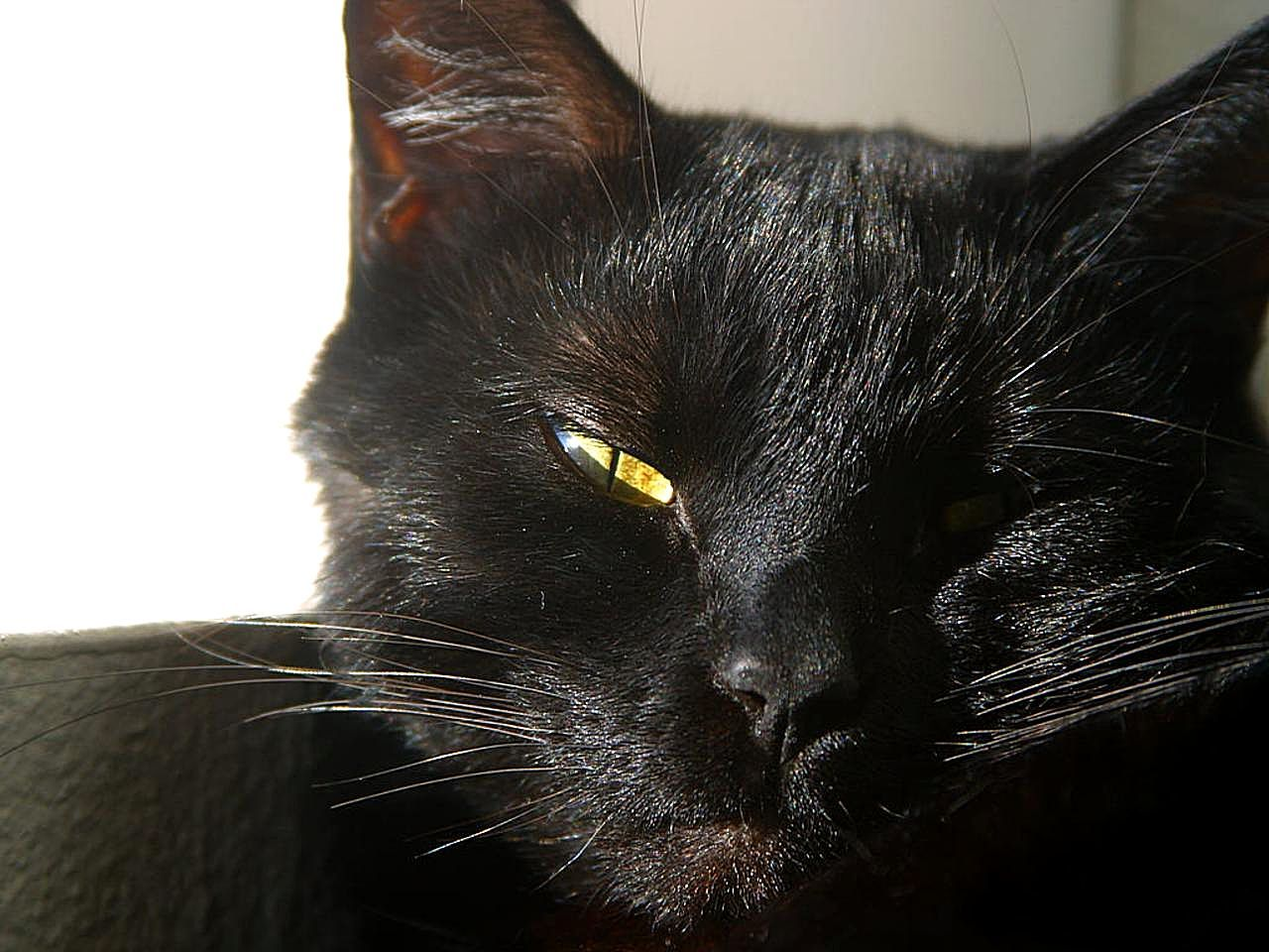Free Picture Cats Eyes Furry Whiskers Black